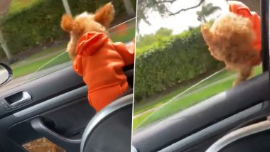 Ginger, Toy Poodle Dog Flies Out From Car Window in the Most Dramatic Way, Survives Luckily! Heart-Stopping Video is Making Pet Owners Think Twice About Pooches Enjoying Car Ride