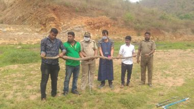 Odisha: 14-Foot-Long King Cobra Rescued From Badamba Village in Cuttack, Later Released in Talachandragiri Reserve Forest (See Pic)