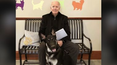 Joe Biden's German Shepherd, Major in Trouble! US President's Family Pet Back in Doghouse After Biting National Park Service Employee at the White House