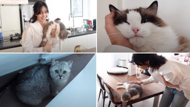 'LILI's FILM' Blackpink's Lisa Introduces the 'L Family' in Latest YouTube Video & It's Purrfect!