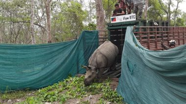 Assam: 3 Rhino Calves Translocated From Kaziranga National Park, Released in Manas Tiger Reserve