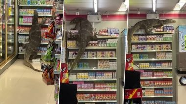 Terrifying Video of Giant Monitor Lizard Inside a 7 Eleven Store in Thailand Goes Viral! Watch