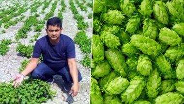Hop Shoots, World's Most Expensive Vegetable Worth Rs 1 Lakh Per Kilogram, Grown in Bihar by Amresh Singh
