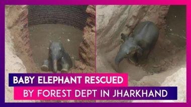 Jharkhand: Forest Department's Efforts To Rescue Baby Elephant Is Successful