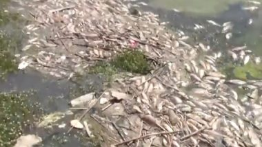 Tonnes of Dead Fish Wash Up on Banks of Polluted Qaraoun Lake in Lebanon, See Harrowing Pictures