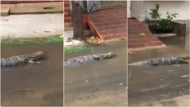 Monitor Lizard Spotted Strolling During Cyclone Yaas, Video Claiming to be from Bangur Avenue in Kolkata Goes Viral