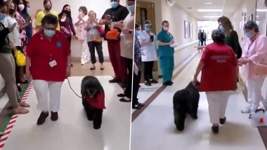 Retirement 'Paw-ty' for Tassy: California Medical Center Cheers for Therapy Dog As She Retires After 8 Years' Service, Watch Video