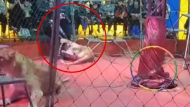 Lioness Attacks Trainer During Circus Performance in Russia, Horrific Video Goes Viral