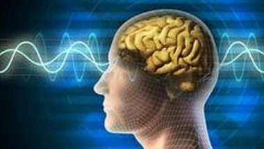 Science News | Study Unveils How Proteins Control Information Processing in Brain