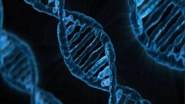 Health News | Novel Tool to Activate Deep Brain Neurons by Combining Ultrasound, Genetics Discovered