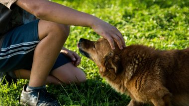 Can Pets Like Dogs and Cats Spread COVID-19 to People? Here's What Experts Say on Transmission of Coronavirus From Animals to Humans