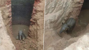 Heart-Warming Pics of Baby Elephant Rescued by Forest Department After It Was Trapped in Well Are Pure Gold