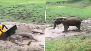 Karnataka: Female Elephant Stuck in Mud Puddle in Moleyur Range of Bandipur Tiger Reserve Rescued by Forest Department Officials (Watch Video)