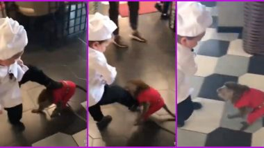 'Mini Khabib' vs Monkey Video Goes Viral Amid Hasbulla Magomedov vs Abduroziq Scheduled Fight