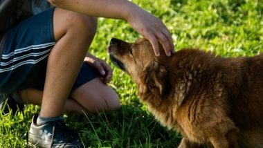 Petting Therapy Dogs Can Reduce Anxiety, Enhance Thinking Skills in Stressed Students