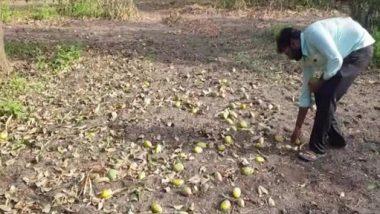 Cyclone Tauktae Damages Mango Trees, Ruins Farmers in Gujarat's Amreli (See Pics)
