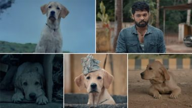 777 Charlie Teaser: Makers Share the First Glimpse of the Film on Rakshit Shetty's Birthday (Watch Video)