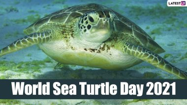 World Sea Turtle Day 2021: Know Date, History and Significance of the Day That Raises Awareness About Protecting Turtles
