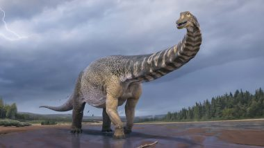 Australotitan Cooperensis, Identified as New Species, Is Largest Dinosaur Found in Australia, Say Experts