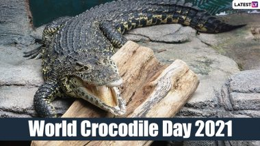 World Crocodile Day 2021: Learn Amazing Facts About Crocodiles In Interest Of Saving These Endangered Species From Extinction