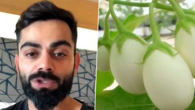 Virat Kohli Claims To Be 'Vegetarian' Not 'Vegan', Netizens Continue Trolling Indian Captain For Including Eggs In His Diet