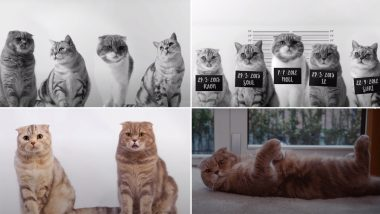 BTS Butter Version Featuring Cats Is a Purrfect Rendition if You Love These Feline Beings (Watch Video)