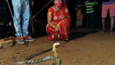 8-Foot Long King Cobra Rescued by Woman in Odisha's Mayurbhanj