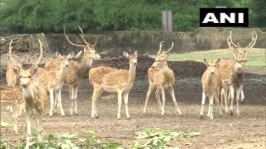 Black Panther, Lioness, Deer Give Birth to Healthy Cubs at Assam State Zoo in Guwahati