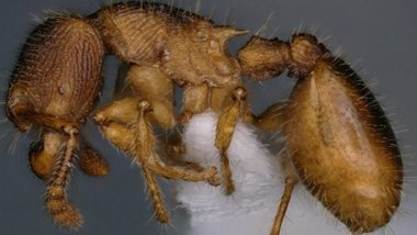 Two New Species of Small-Colony-Forming Ants Discovered in Mizoram Forests for First Time