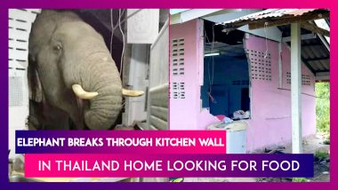 Elephant In The Room: Wild Pachyderm Breaks Through Kitchen Wall In Thailand Home Looking For Food