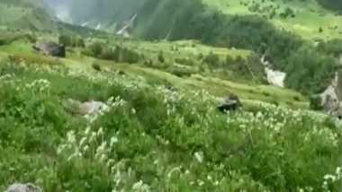 'Valley of Flowers' in Uttarakhand's Chamoli Opens for Visitors, Negative RT-PCR Report Mandatory (Watch Video)