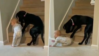 An Adorable Video of a Dog Protecting Toddler From Climbing Stairs Will Melt Your Heart; WATCH