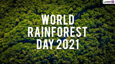 World Rainforest Day 2021: Know Date, Theme, History and Significance of Observing the Special Day for the Precious Natural Resource