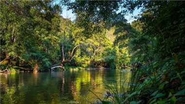 World Rainforest Day 2021: Netizens Share Quotes, Messages, HD Images, and Wallpapers to Highlight the Importance of Saving the Pristine Ecological Spaces