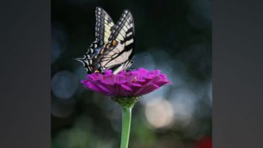 Excess Nitrogen From Agriculture, Vehicle Emissions and Industry Is Endangering Butterflies in Switzerland, Say Researchers