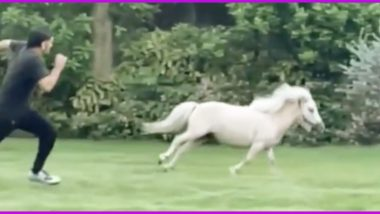 MS Dhoni's Wife Sakshi Shares a Fun Video of CSK Skipper Racing With Pony, Can You Guess Who Won The Race?