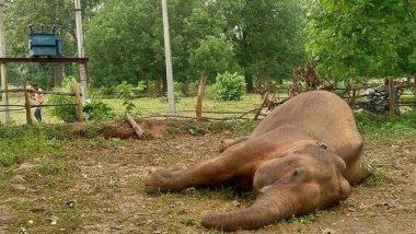 Elephant Found Dead in Forest Area of Chhattisgarh's Raigarh District