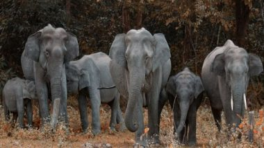 Science News | Here's How an Elephant's Trunk Manipulates Air to Eat, Drink