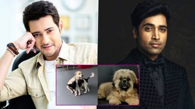 Mahesh Babu, Adivi Sesh Share the Glimpse of Their Cute Pet Dogs to Fans