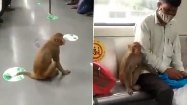 Monkey Sneaked Into Delhi Metro, Remained On Board for 3–4 Minutes: DMRC (Watch Video)