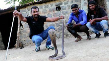 Snake Rescue Master, Sarpmitra Akash Jadhav From Ahmadnagar