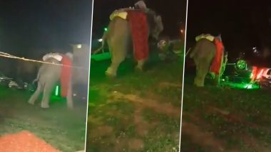 Elephant, Part of Wedding Procession, Goes on Rampage in Prayagraj, Groom and Baraatis Run for Cover