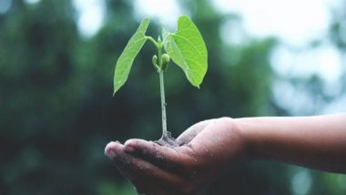 World Environment Day 2021: Action and Awareness, Two Important Steps Towards Sustainability