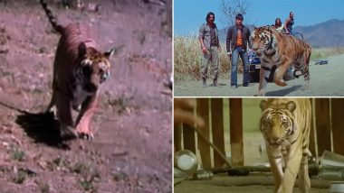Before Vidya Balan's Sherni, 5 Bollywood Films That Also Revolved Around Tigers (Watch Videos)