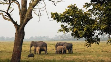 Assam To Have 7 National Parks Now, Becomes Second State in India To Have Highest Number of National Parks After Madhya Pradesh