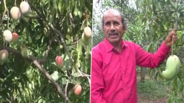 Mango Sellers in MP's Rajpura Village Have International Variety of Mangoes From Countries Like Mexico, Afghanistan Sold at Rs 1000 per kg