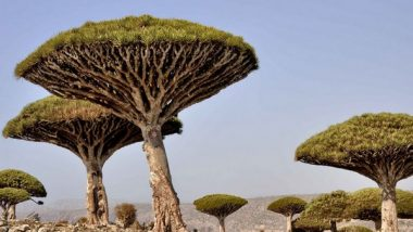 World News   UAE's USD 110 Mn Development, Relief Aid Enabled Socotra to Overcome Challenges, Dire Conditions