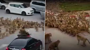 Viral Video: Monkey Gangs Clash on Road in Thailand's Lopburi, Bring Traffic to Halt