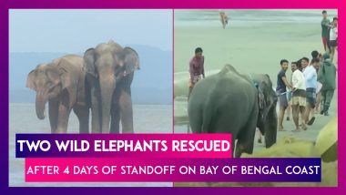 Bangladesh: Two Wild Elephants Rescued After Four Days Of Standoff On Bay Of Bengal Coast