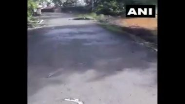 Crocodile Seen on Roads of Sangli District in Maharashtra After Water Level of Krishna River Rises Due to Heavy Rainfall (Watch Video)